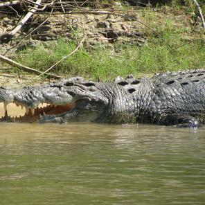 World Wide Crocodile Encounters