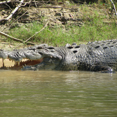 The Best Kind of Crocodile Encounters