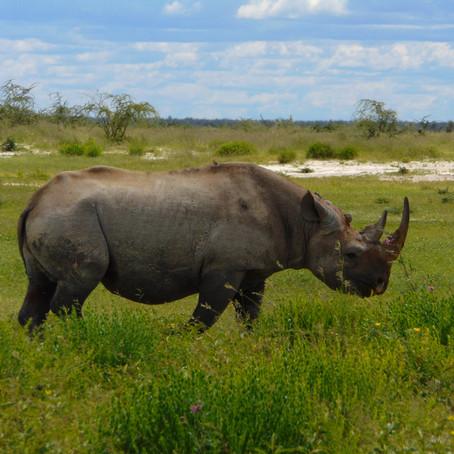 Rare Animal Sightings - Namibia & Botswana