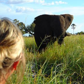 African Elephants - Beautiful Giants