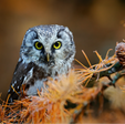 Conservation Habitats