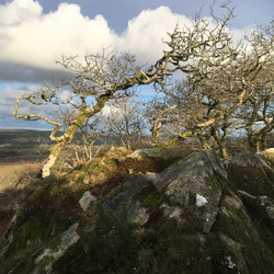 High up in Ty Canol Woods