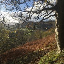Autumn in Pentredwr