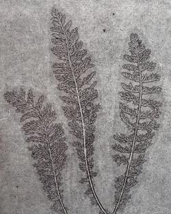 Silverweed Monoprint