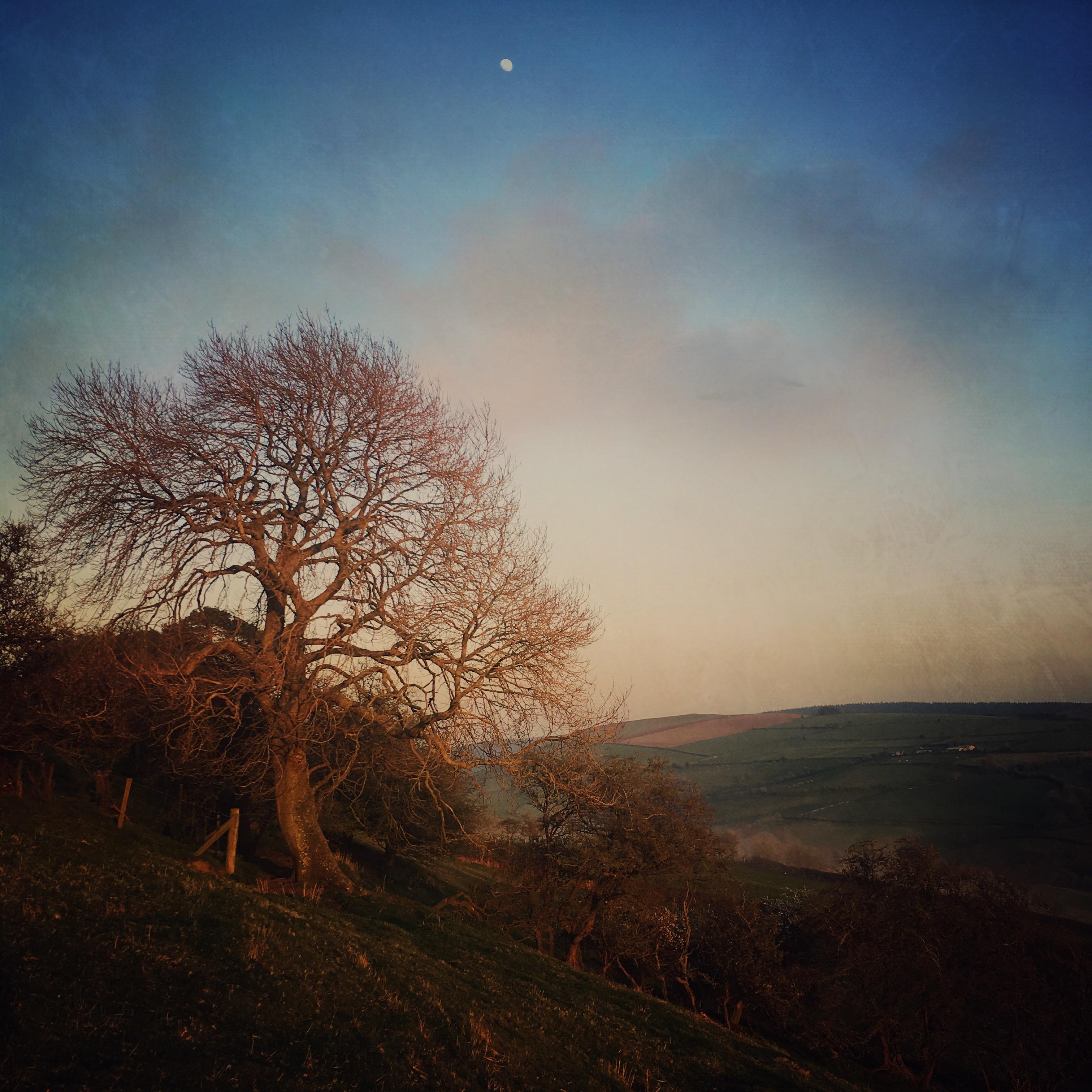 Ash and Rising Moon