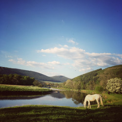 River Tweed and White Horse