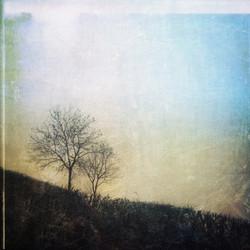 Delicate Hedgerow