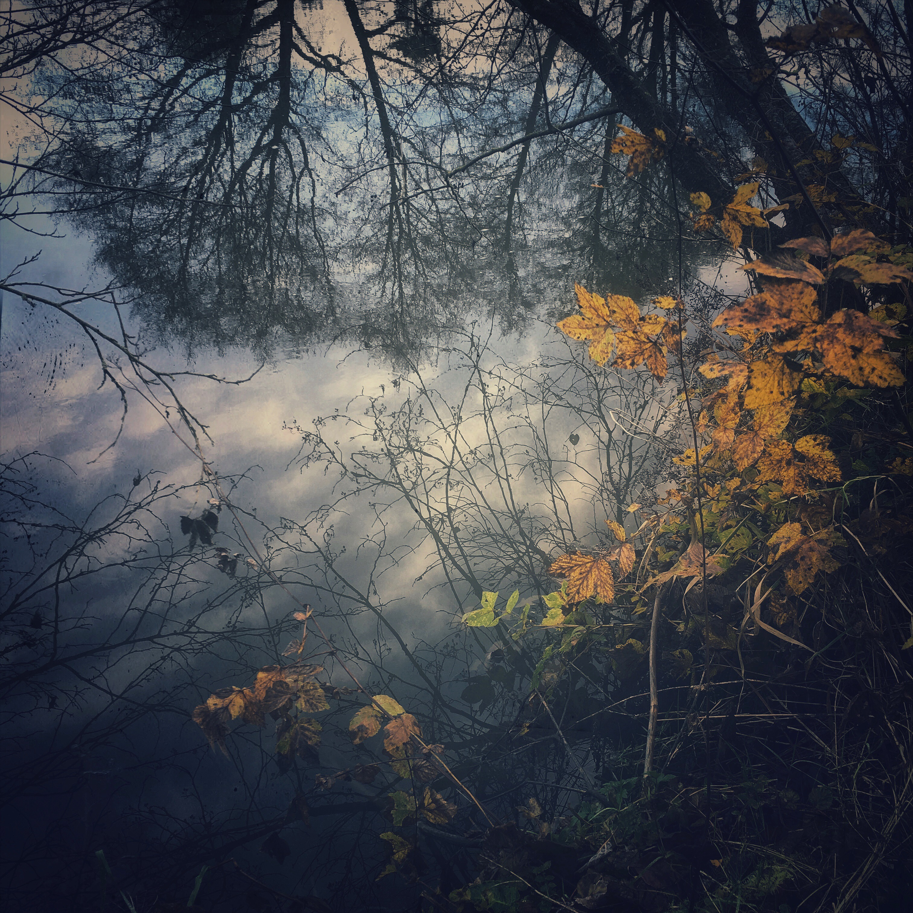 Reflections in the Teme