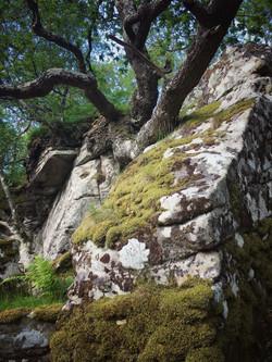 Tree or rock?
