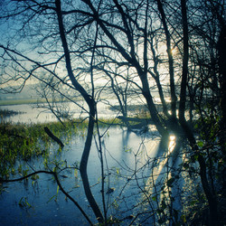 Riverside Trees, Dinefwr