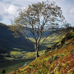 Rowan on Aberglasney Pass