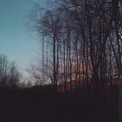 Tall Trees and Moon