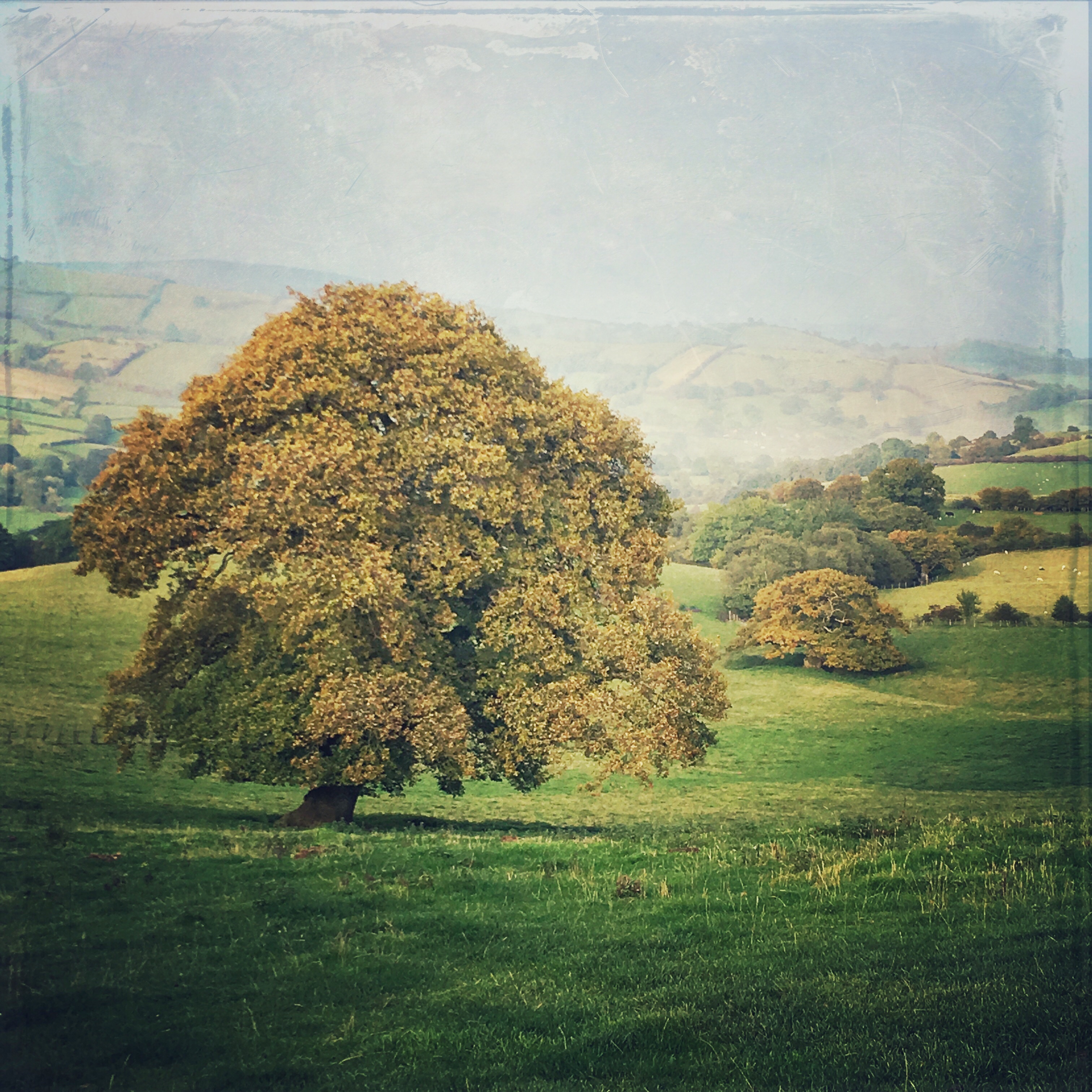 Classical Autumnal Oak, Clun Valley