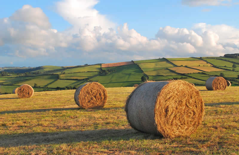 Hay Bales above the Redlake