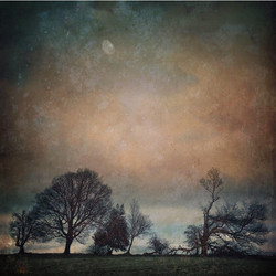Boundary Trees at Sunset