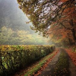 Autumn comes to Menutton