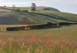 Sorrel Fields above the Redlake