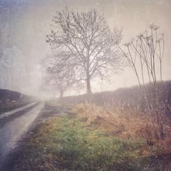 The Winter Lane