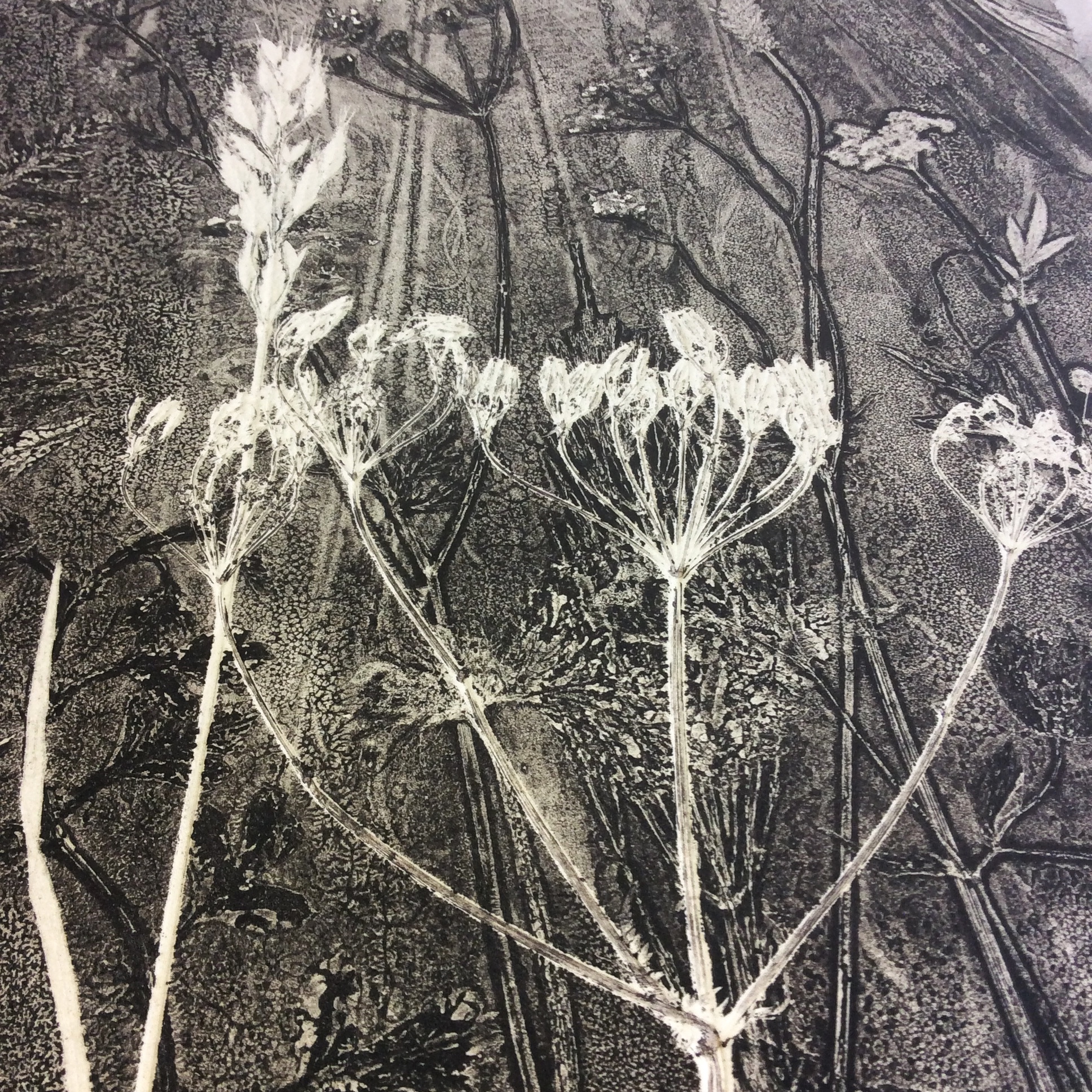 Umbellifer Monoprint - detail