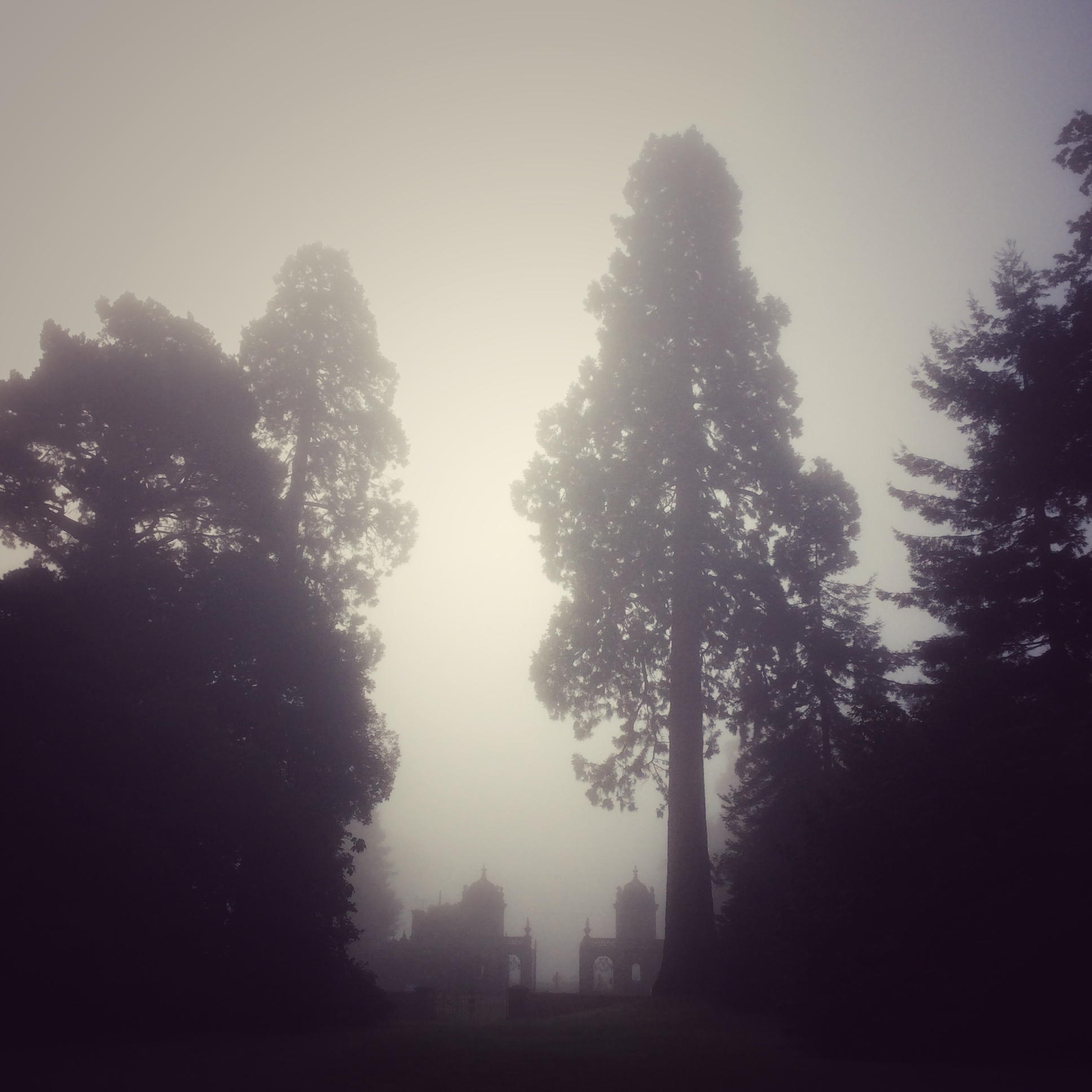 Ghostly Trees at Westonbirt