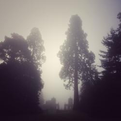 Ghostly Trees at Westonbirt