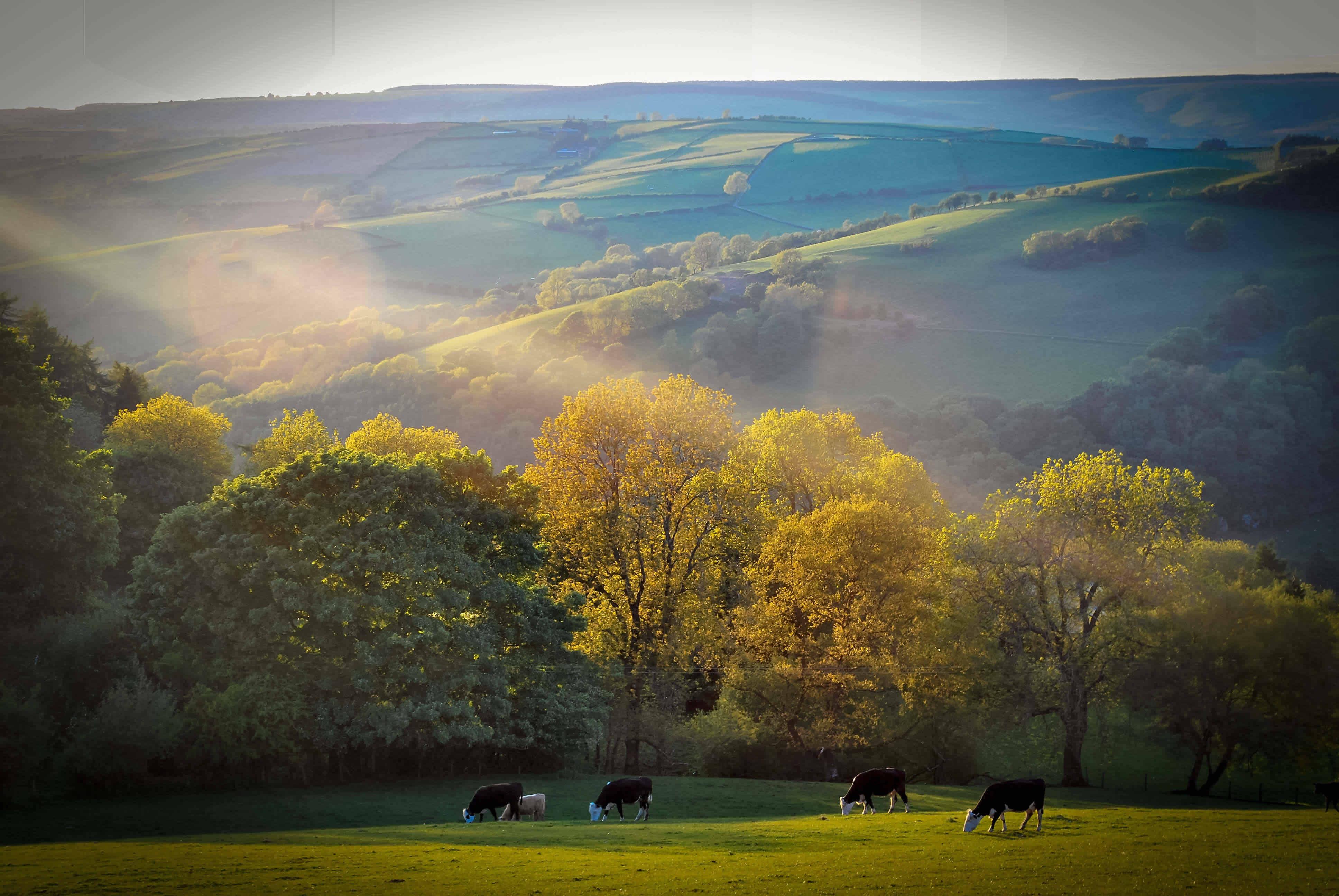 A Golden Evening, Clun Valley