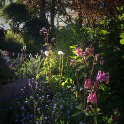 My Garden in Evening Sunshine