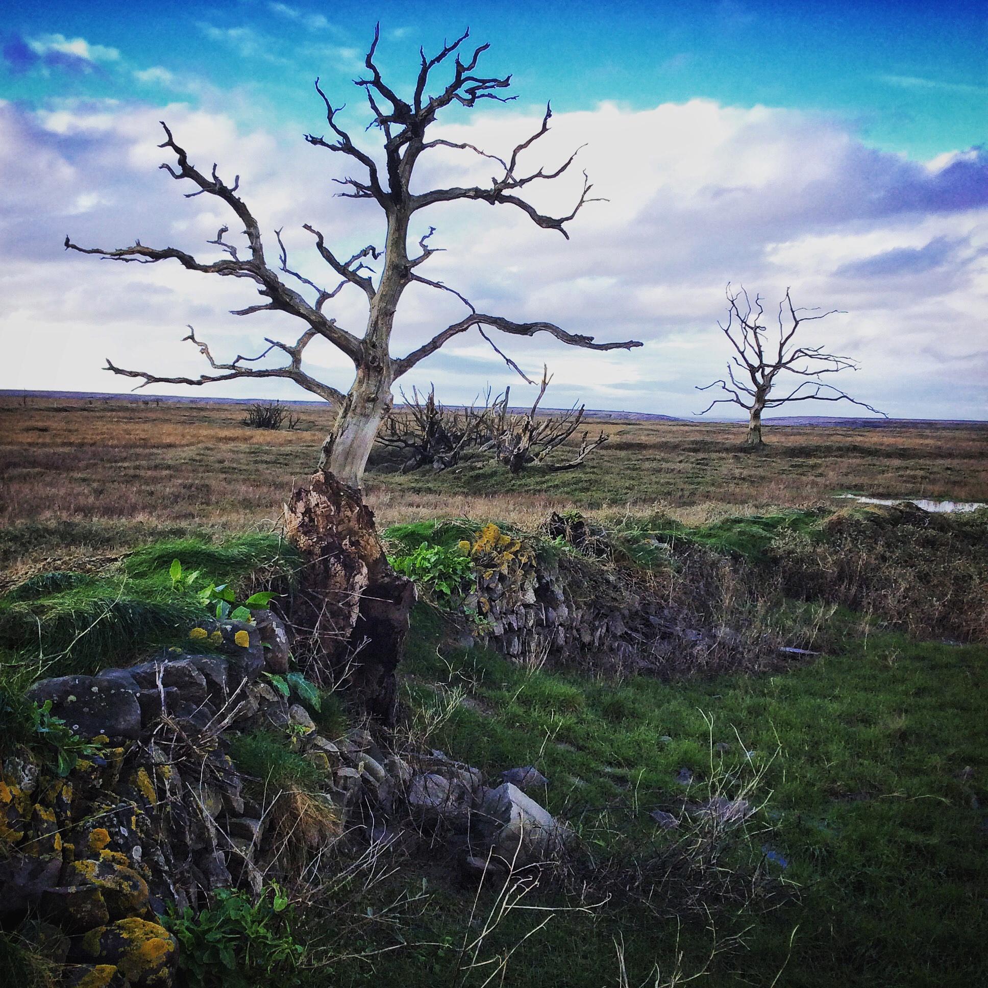 Stark Trees on Porlock Bay, Somerset