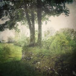 Quiet Trees at Bleddfa