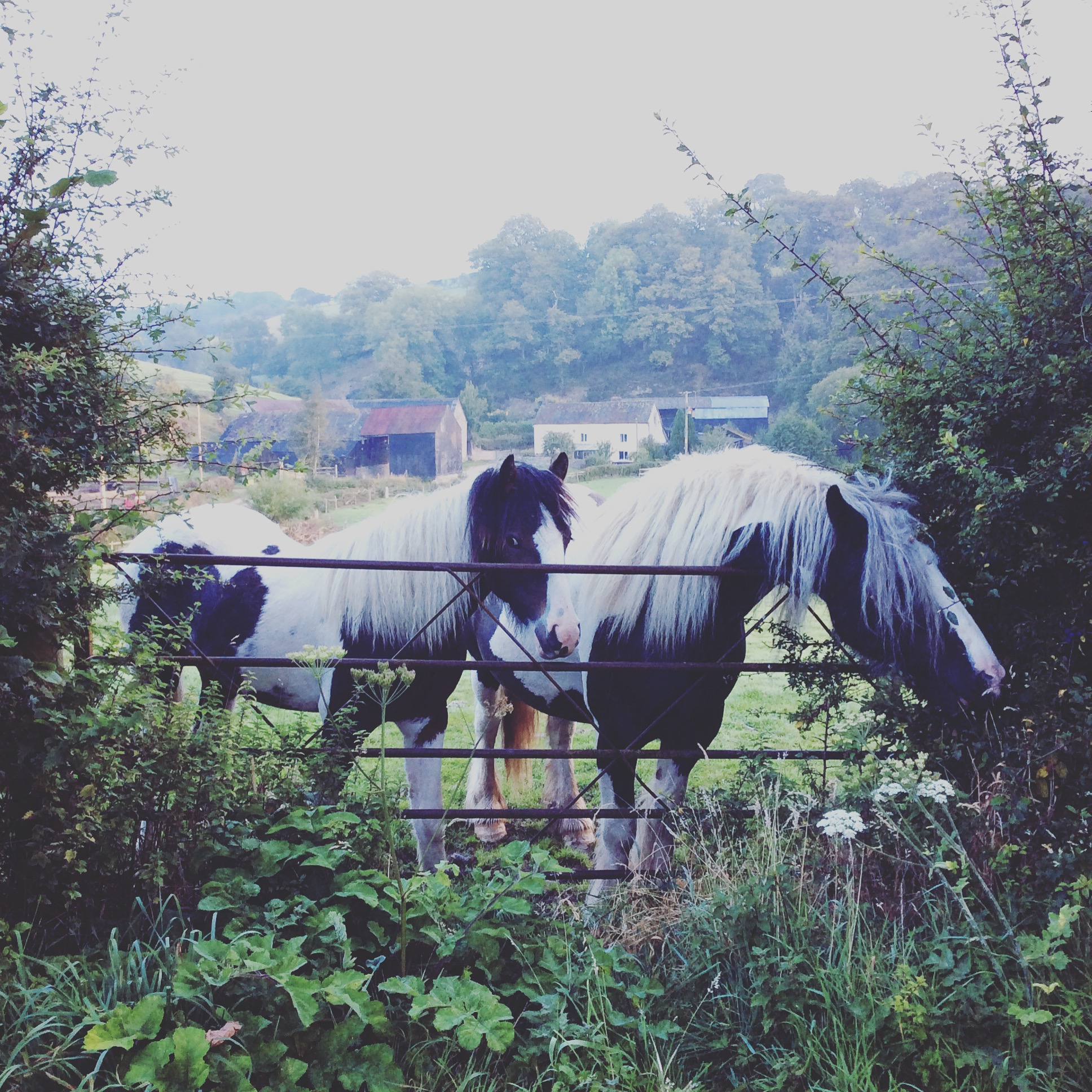 Horses at The Weir