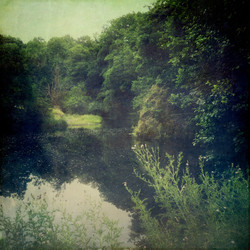 Quiet Wooded River Edge