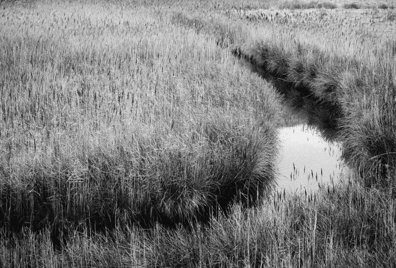 A Course through the Reeds