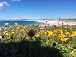 West Beach machair flowers