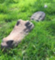 web croc.jpg