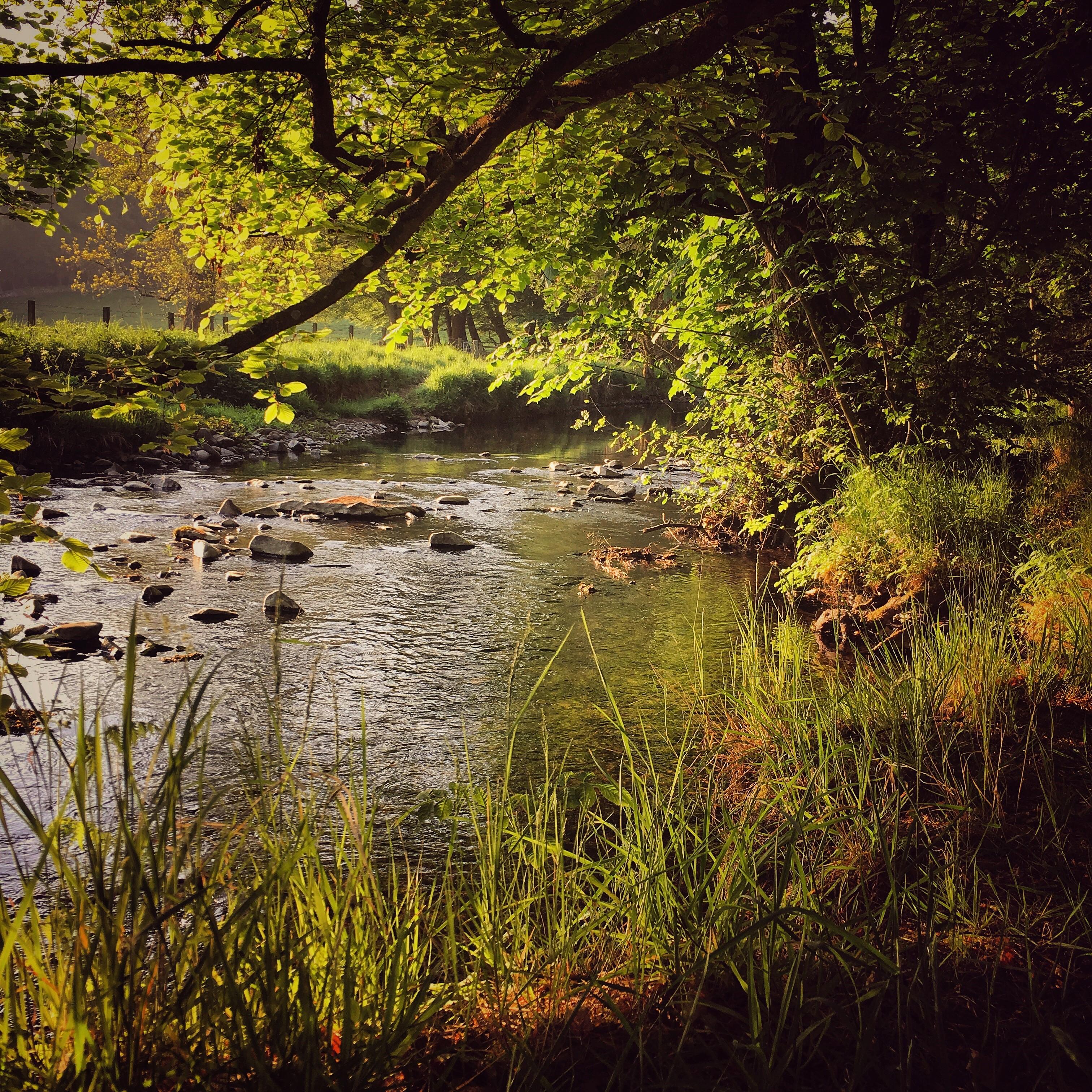 Traquair brook