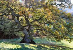veteran oak honeyhole
