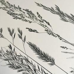 Grass Monoprint