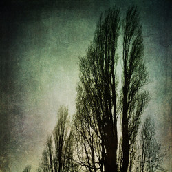 Urban Trees in Hereford