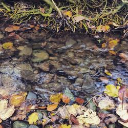 Leaf-scattered Brook, Menutton