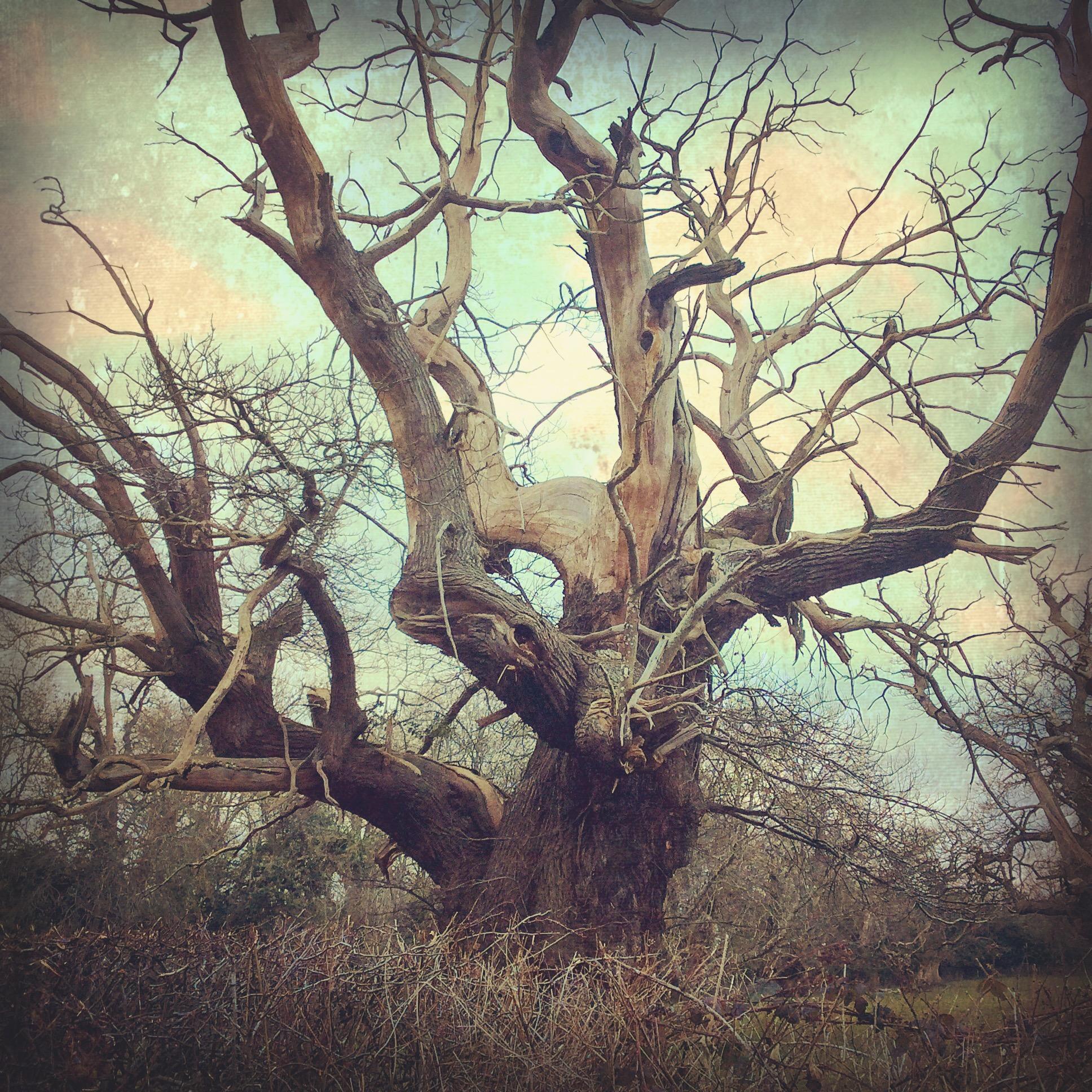 Old Chestnut, Croft