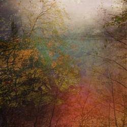 Bodlondeb Woods