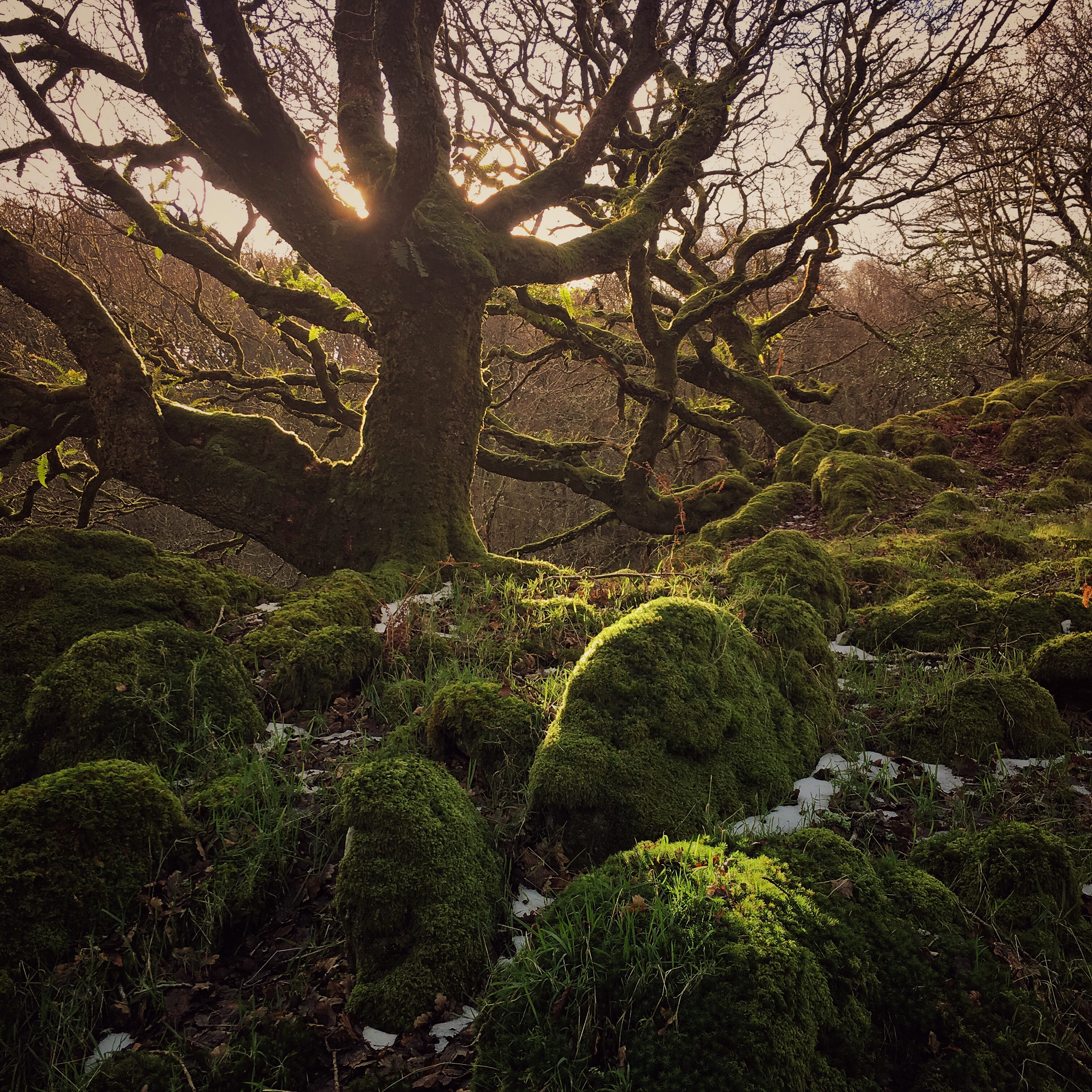Trees and Light, Ty Canol Woods