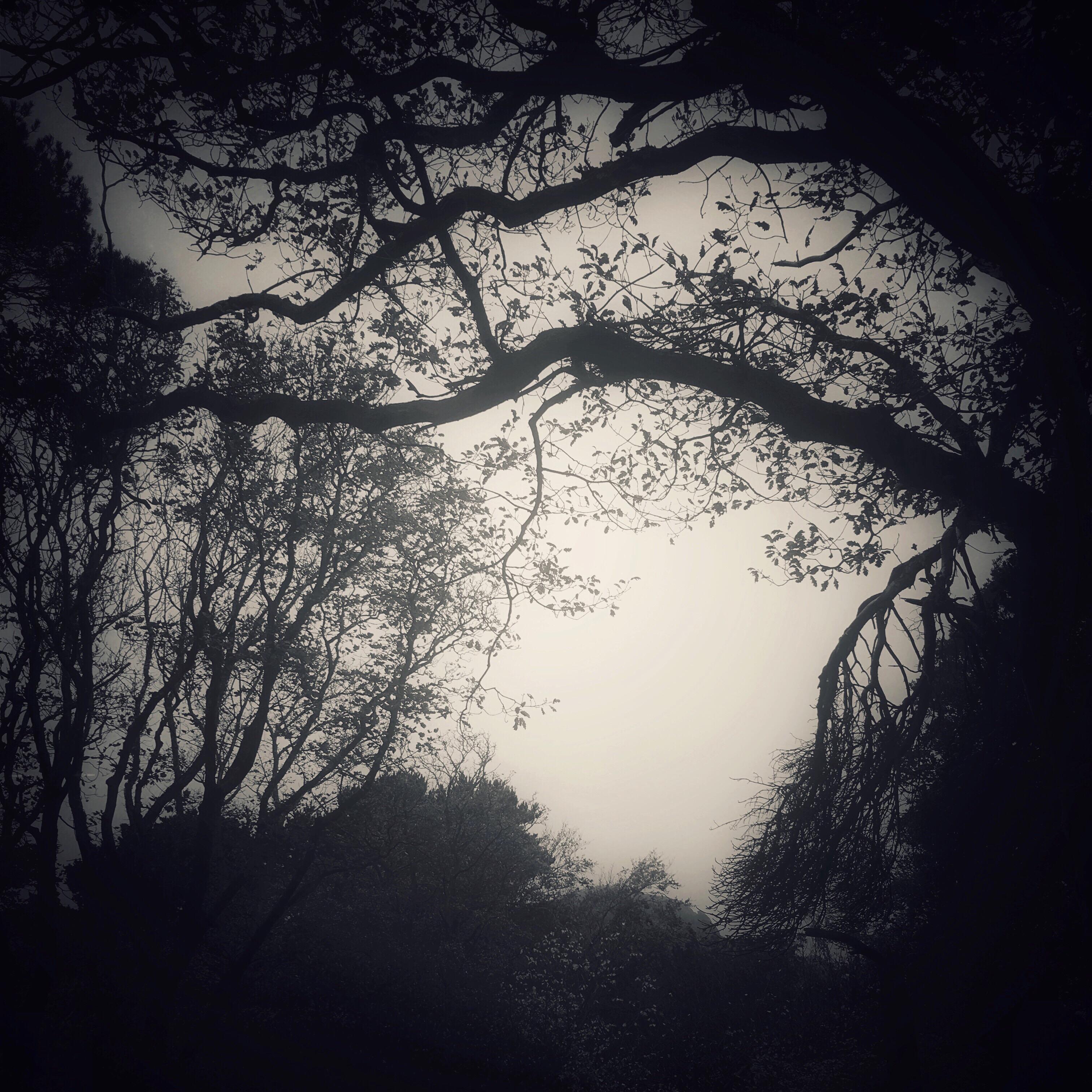 Treescape, Bodlondeb Wood