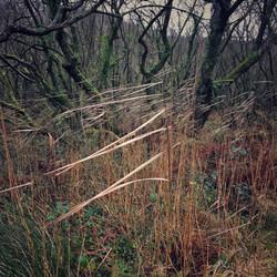 Damp Woods near Pwllgwaelod