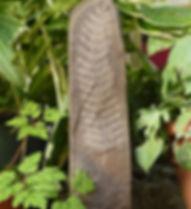 web wild stone fern2.jpg