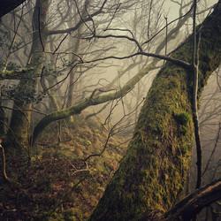 Foggy Oaks at Woodside, Clun