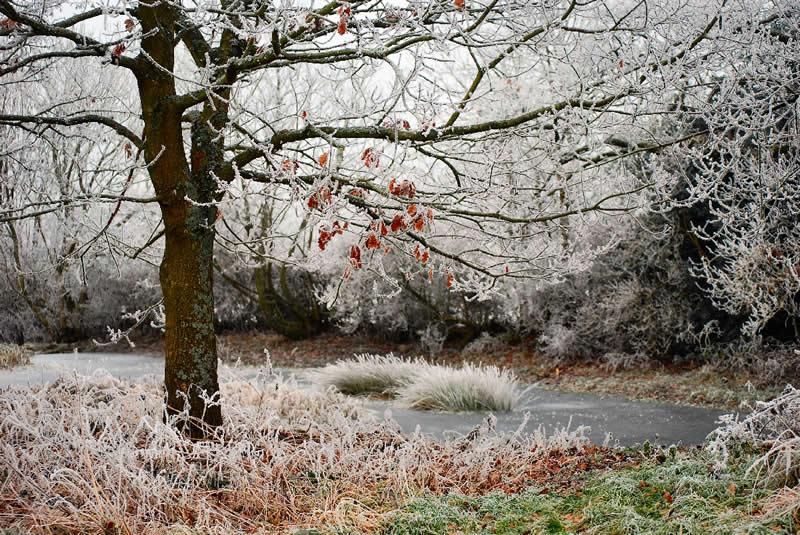 Little Oak at Pentre Hodre Pond