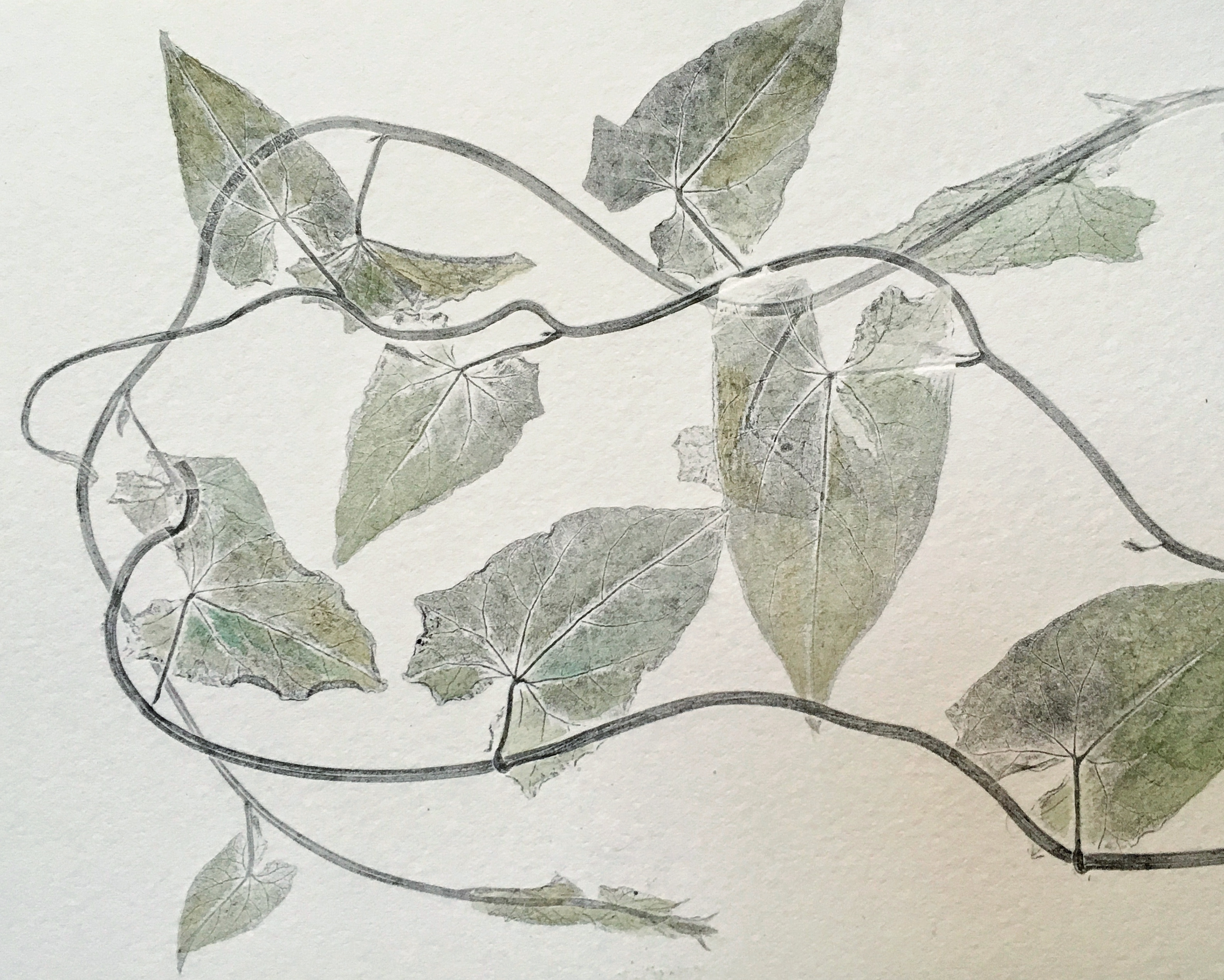 Hand-tinted Botanical Monoprint
