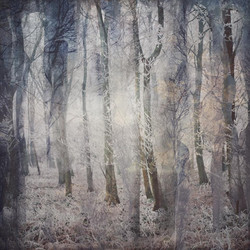 The Frosty Wood