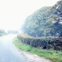 Misty Lane at The Weir
